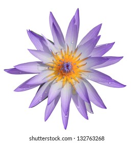 Top view purple water lilly on white background