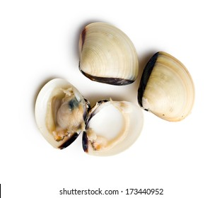 top view of raw clams on white background