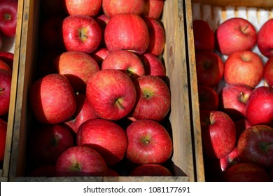 Top view of red apples in wooden tray with shade of light. Famous red apple in Aomori, Japan. Red nature background. Still life photo for design work. Contrast colour style. Selective focus.