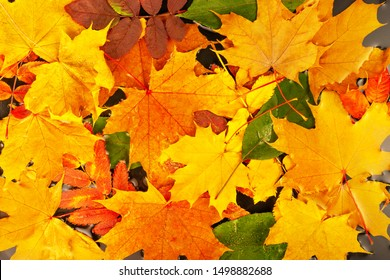 top view of red, green and yellow leaves in water like background, autumn concept