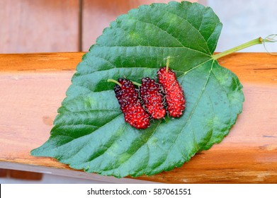 Top view Red Mulberry on the leaf