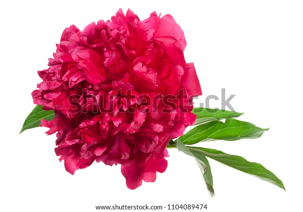 Top view of the red peony