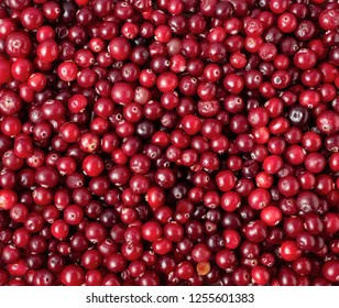 Top view of ripe cranberry, food background