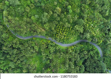 Top view of the road in surrounded by trees