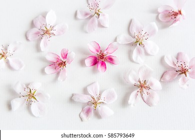 top view of sacura flowers laying on white background. Concept of love. hi key spring pattern. Dof on sacura flower.