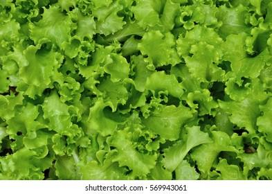 Top view of salad vegetable texture