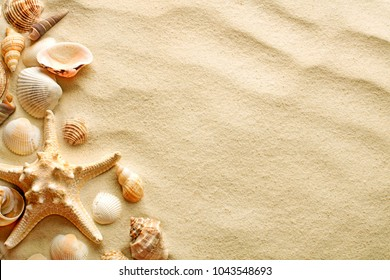 top view of sandy background with dunes and seashells