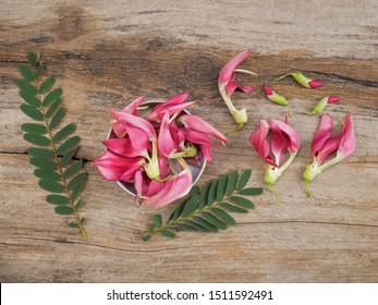 Top view of Sesbania Grandiflora or Agati Grandiflora red flowers known as vegetable hummingbird, agati or hummingbird flower with green leaves on wood texture background.