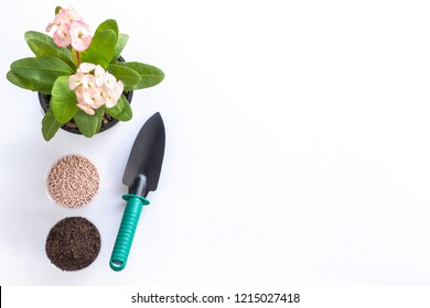 Top view shovel, soil, fertilizer and Christ plant or Christ thorn in garden pot isolated on white background