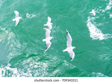 Top view of silhouette of flying seagulls. Bird flies over the sea. Seagulls hover over deep blue sea. Gull hunting down fish. Gull over boundless expanse air. Free flight.