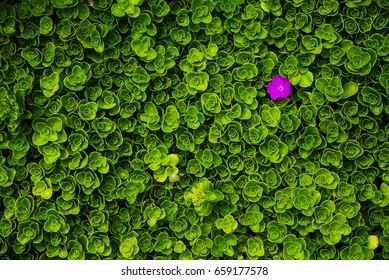 top view of single purple flower bloom amidst lush green plants background