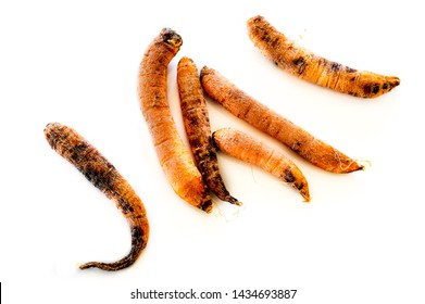 Top view of six rotten, dry, dead carrots isolated on white background. Black mold fungus on carrots.