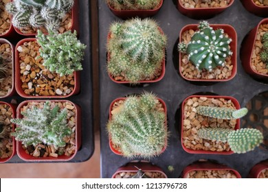 top view of small cactus