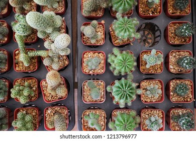 top view of small cactus farm