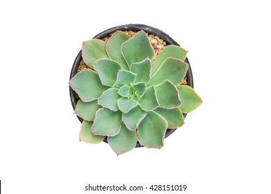 Top view of Small Cactus plant isolated with clipping path