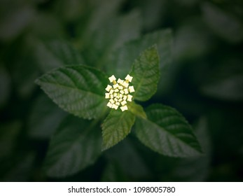 Top view of small flower on green leaves background, Vintage Filter