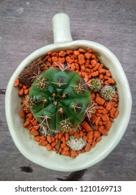 Top view small green cactus flower in white  ceramic cup with rocks on plank