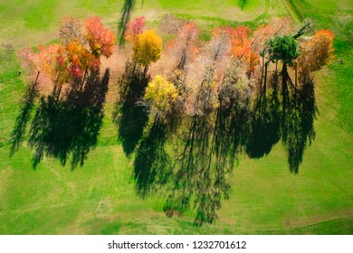 Top view of a small group of trees in full autumn season