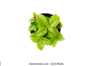 Top view of small plant pot on white background