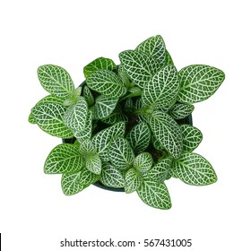 Top view of small plant pot on white background.