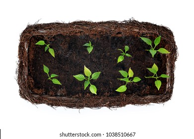 Top view of small plants in pot isolated on white.