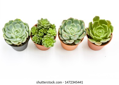 Top view of small potted cactus succulent plants, set of various types of Echeveria succulents on white background with clipping path.