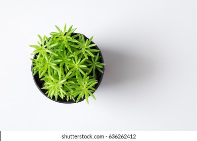 Top view small tree plant in pot isolated on white desk background