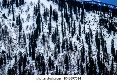 Top View of the snow covered tress near manali,India