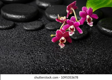 top view spa background of zen massaging stones with drops, mini orchid (phalaenopsis) and green leaves, copy space