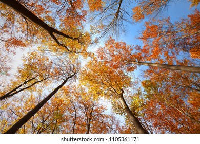 Top view of sunny colorful autumn seasonal forest trees.