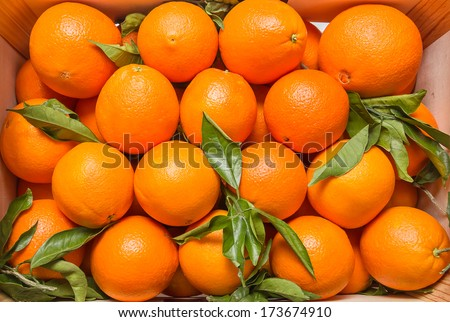 Top view of tasty spanish oranges freshly collected on a wooden box