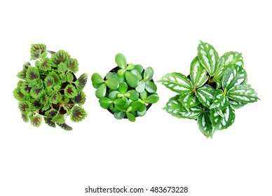 Top view of three small plant in black pot on isolated white background