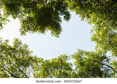 Top view with tree branch and blue sky