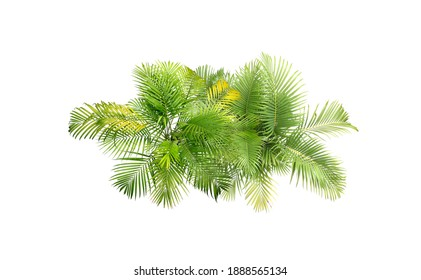 top view tropical leaves foliage plant bush palm arrangement nature backdrop isolated on white background