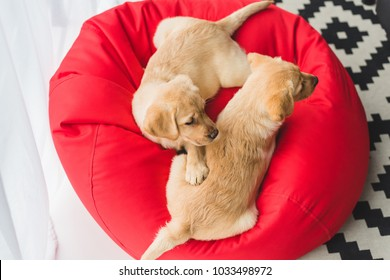 Top view of two beige puppies sitting on red bag chair
