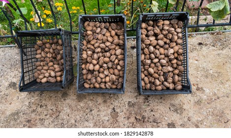 Top view of unshelled browned walnuts in three counters in Greek market ready for sale. Natural food background of nuts.