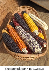 Top view of variety of colorful cobs of corn