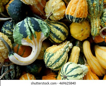 Top view of a variety of colorful ornamental gourds / Colorful gourds