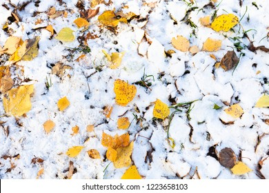 top view of various fallen yellow leaves on lawn covered with the first snow in cold autumn day