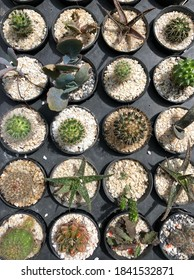 top view of various kinds cactus in the pot