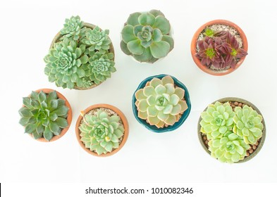 Top View of Various types of mini green flowering echeveria succulent house plants pots on white background