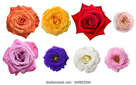 White flowers meaning images stock photos vectors shutterstock top view vary kind of rose on white background assorted rose element for graphic design mightylinksfo