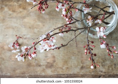 Top view of a vase with a bunch or bouquet of fresh tree branches blooming with pink and white flowers on a old rustic wooden background with copy space. Spring interior design or hello spring concept