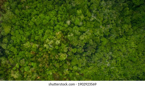 Top view of the vast amazon jungle