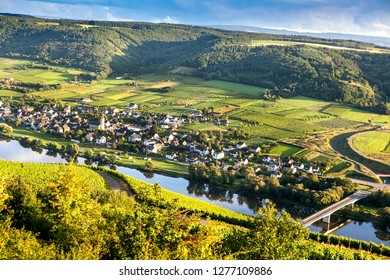 Top view of the vineyards and the river Mosel. Germany's vineyards in the Mosel. Sunset on the Mosel