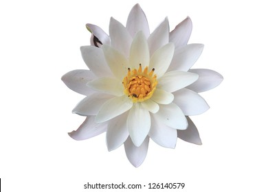 top view water lily in isolated white beautiful