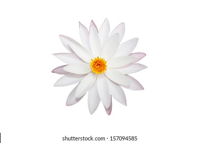 top view water lily white in isolated white