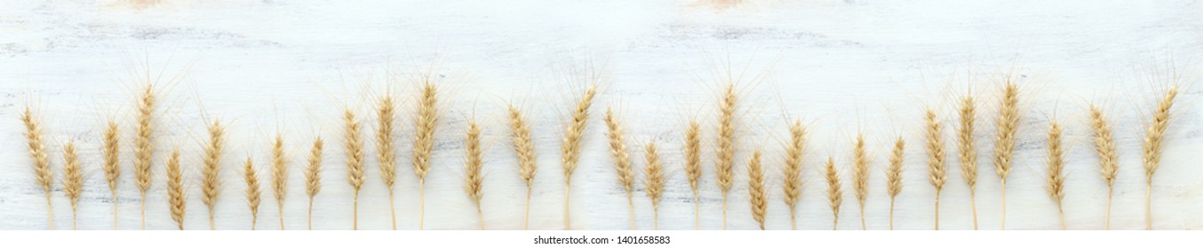 top view of wheat crops over white wooden background. Symbols of jewish holiday - Shavuot