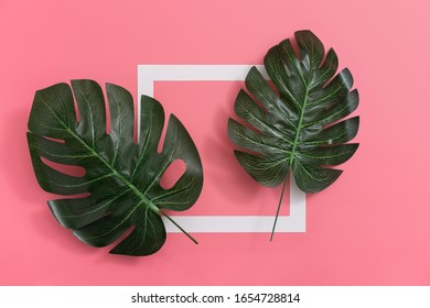 Top view of white frame with leaves of monstera on pink background , minimalistic abstract concept.