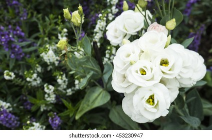 top view of white Lisianthus flowers in garden